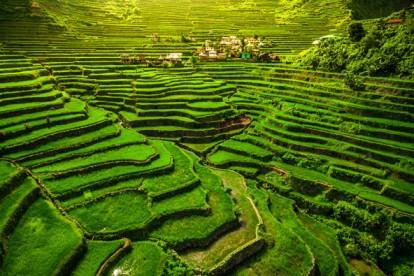 טרסות האורז פיליפינים